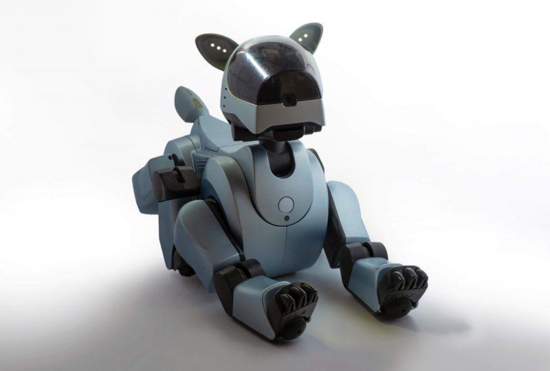 robot animali