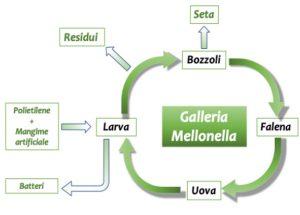 The complete ReciclaGame process (photo: eruflex)