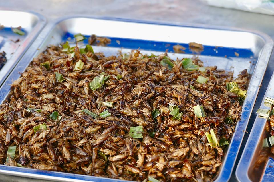 Street food a base di insetti, molto comune nei Paesi asiatici