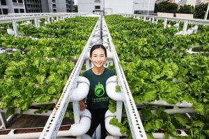 Carpark rooftops turn into urban farms