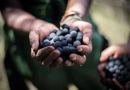 Seedballs, per piantare 20.000 alberi in 20 minuti